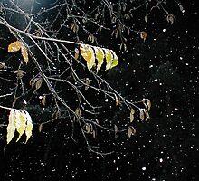 leaf  by dawnesha