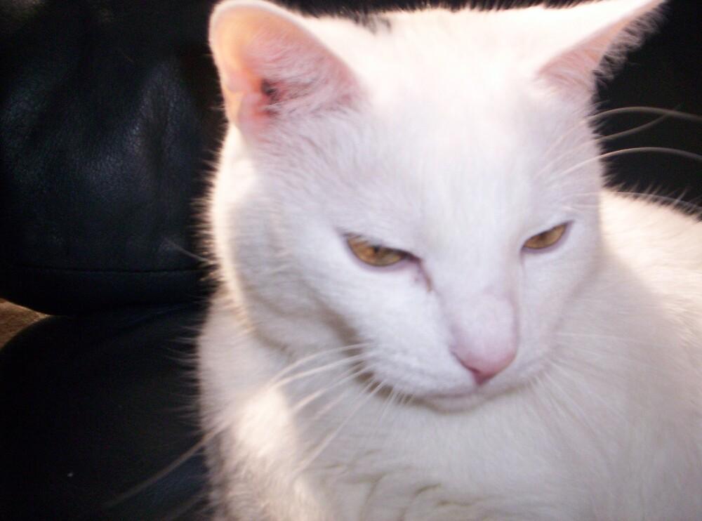 cat by dawnesha