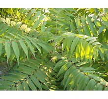 Green Fern Tree Photographic Print