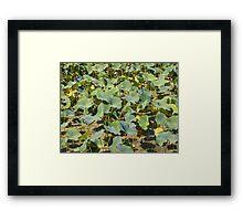 Summer pond lillies Framed Print