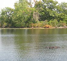 alligator sighting in brockton mass? by photofanatic