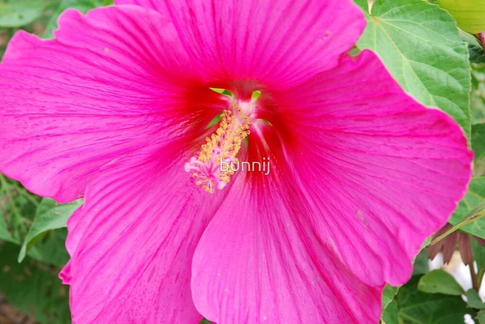 hot pink flower by bunnij