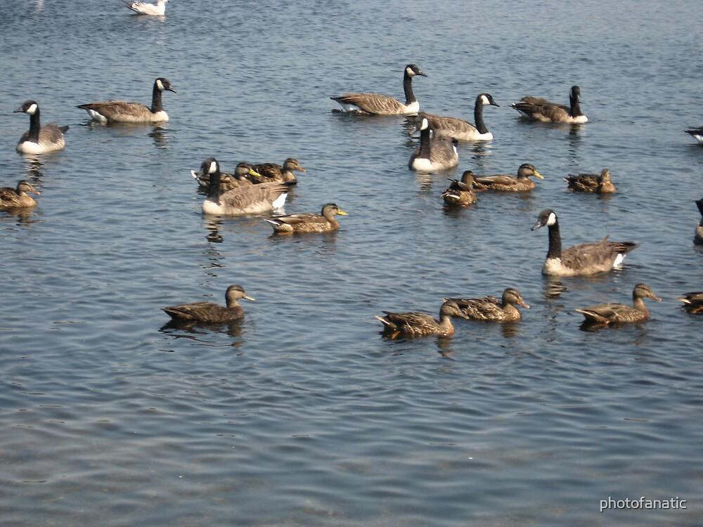 birds on brockton reservoir by photofanatic