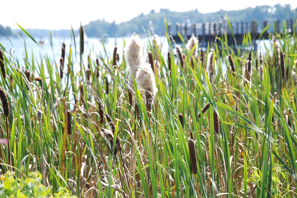 Cat Tail Marshes by bunnij