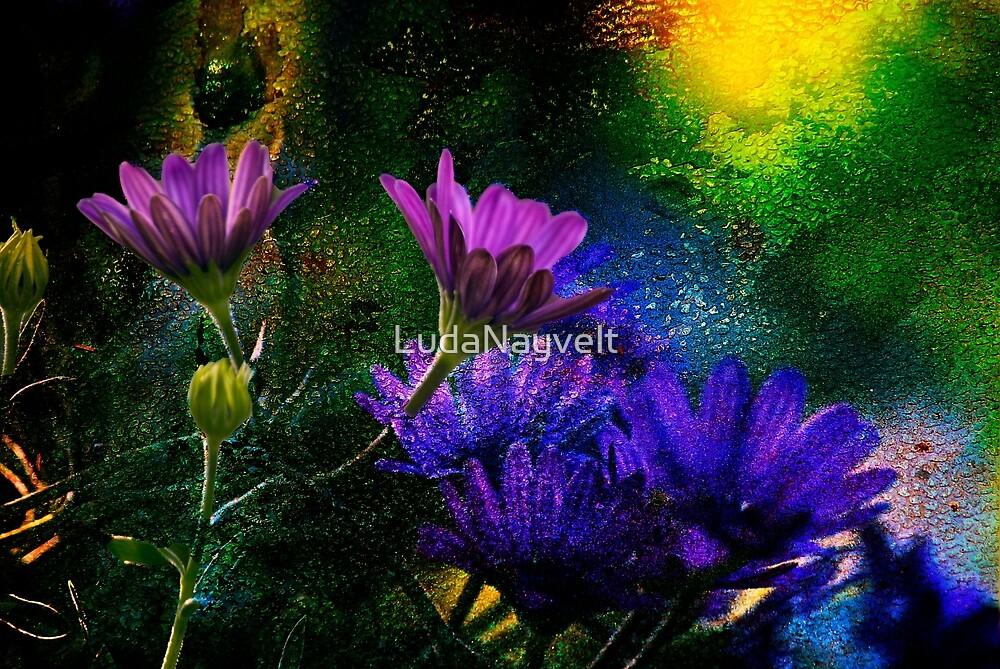 Purple daisy by LudaNayvelt