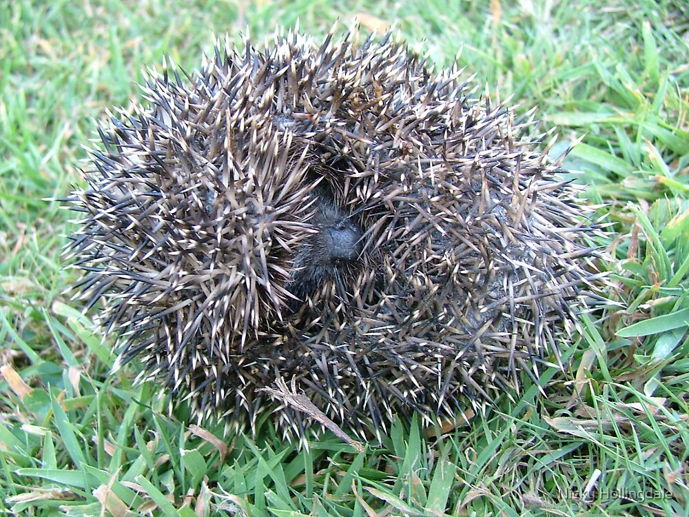 Hedgehog by Nicky Hollingdale