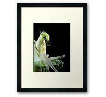 Corn Silk Framed Print
