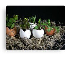 Egg Plant Canvas Print