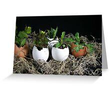 Egg Plant Greeting Card