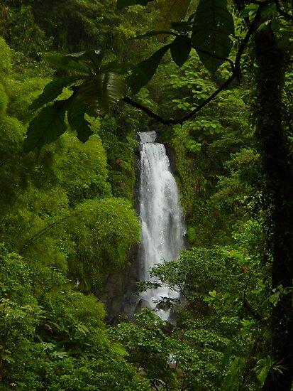 Dominica Falls II by John Harrison