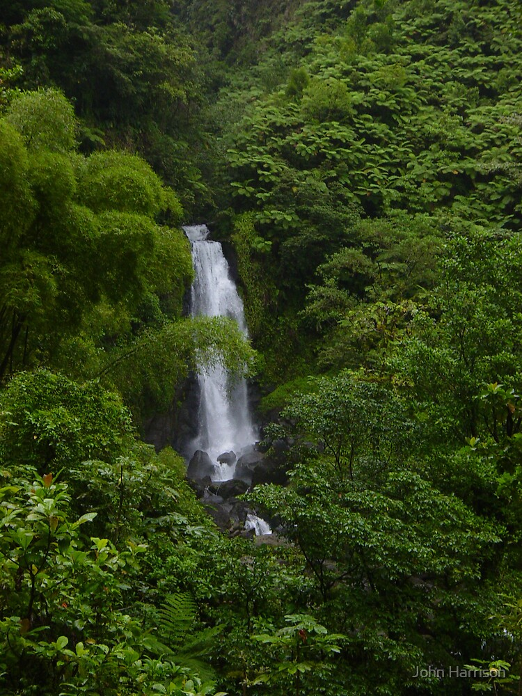 Dominica Falls I by John Harrison