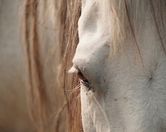 Tired Old Friend by Kara Rountree