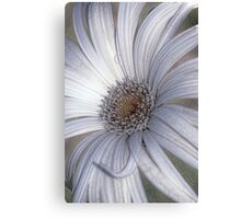 White Daisy Abstract VIII Canvas Print