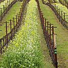Spring Arrives at the Vineyard by John Butler