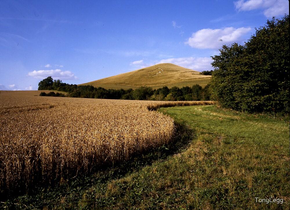 Pickled hill by TonyLegg