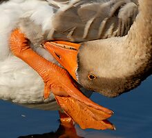 Upside Down Goose by Bonnie T.  Barry