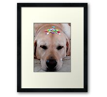 He Partied too Hard Framed Print