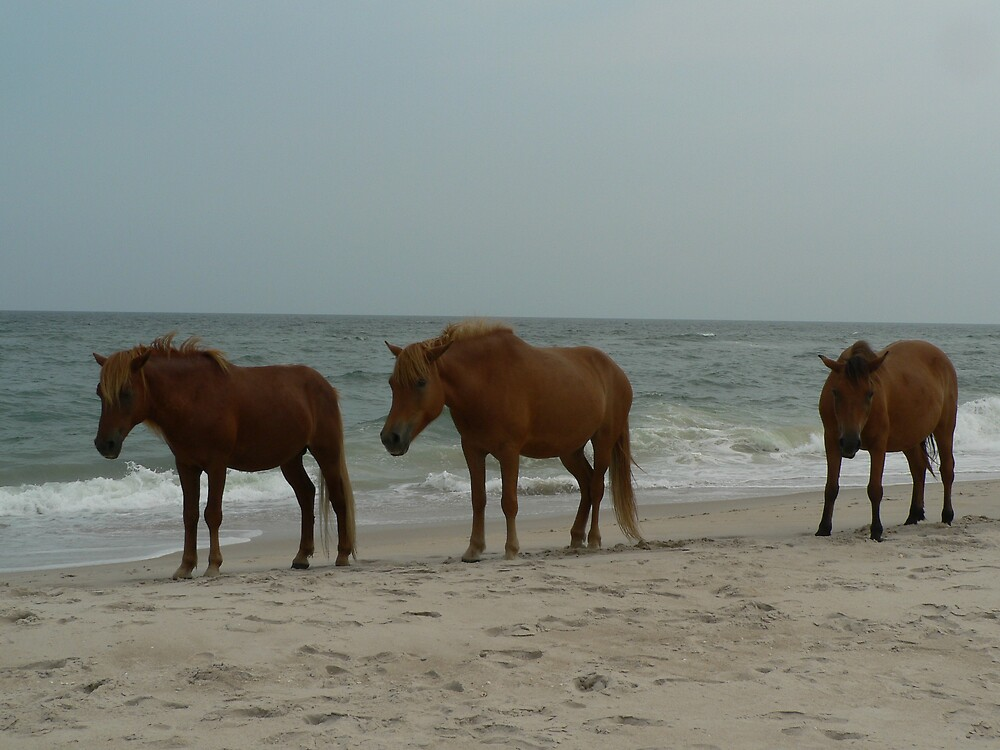 Assateague Horses by RealtorKimWood