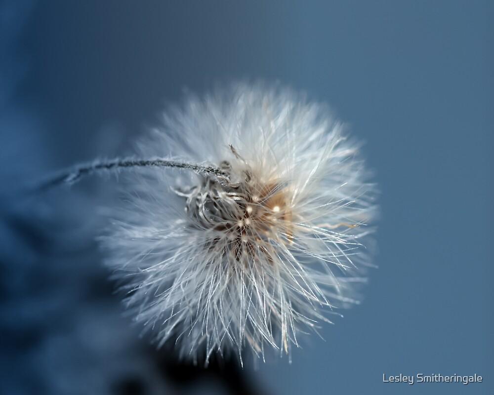 Dandelion Blues by Lesley Smitheringale