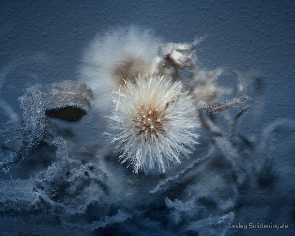 Dandelion Blues still-life by Lesley Smitheringale