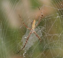 in the center of it's web by Christopher  Ewing