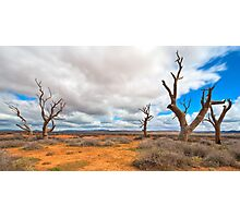 Wilochra Creek - South Australia Photographic Print