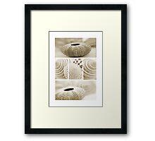 Shell combo Framed Print
