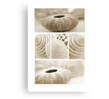 Shell combo Canvas Print