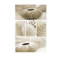 Shell combo Photographic Print