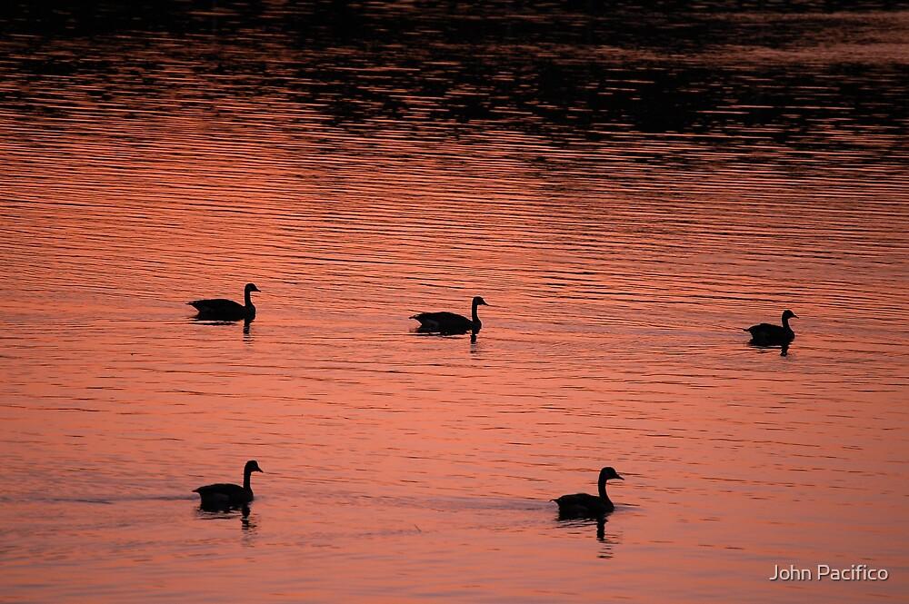 Family swim by John Pacifico