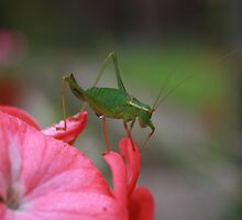 Bugs Life by SWAGBAG