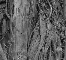 Gnarly Tree Trunk by clairekelly95