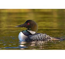 Evening Loon - Common Loon Photographic Print