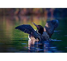 Rise n' Shine - Common Loon Photographic Print