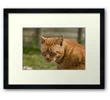 Cute sleepy cat Framed Print