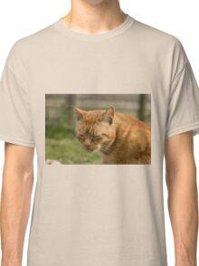 Cute sleepy cat Classic T-Shirt