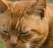Cute sleepy cat Sticker
