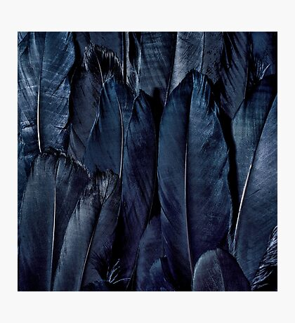 Black Feather Close Up  Photographic Print