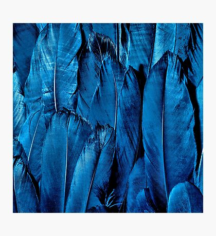 Blue Feather Close Up Photographic Print
