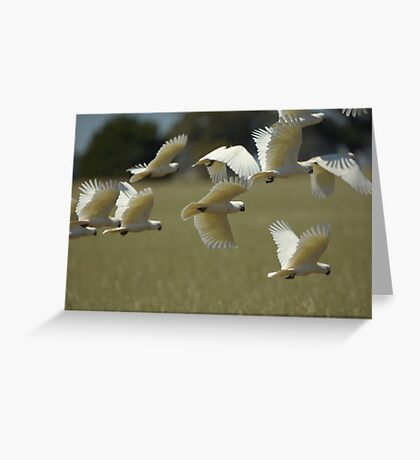 Flying Marauders Greeting Card
