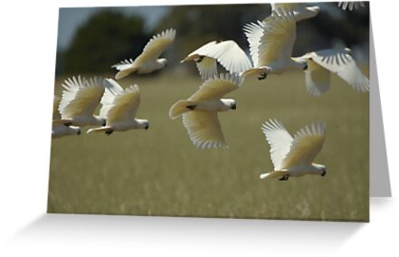 Flying Marauders by Wildpix