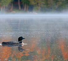 Water colour Loon - Common Loon by Jim Cumming