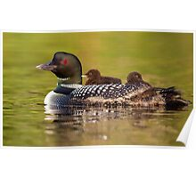 Once around the lake please - Common Loon Poster