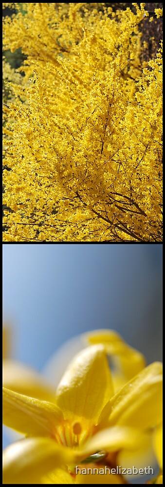 Yellow Flowers by hannahelizabeth