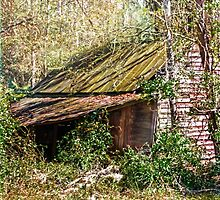 Tin Roof Rusted by designingjudy
