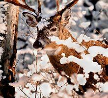 Winter Wonder 2 by Miles Moody
