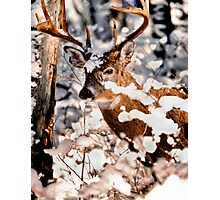 Winter Wonder 2 Photographic Print