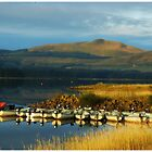 Carron Valley Fishery by MY Scotland