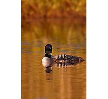 On Golden Pond - Common Loon Photographic Print