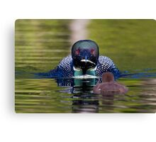 Take-out finally arrives - Common Loon - Buck Lake, Ontario Canvas Print